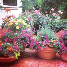 A Container Garden