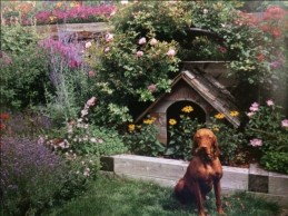 It's not a dog's life if you're surrounded by vegetables and flowers.