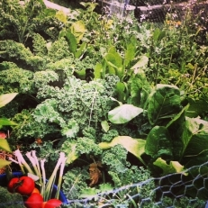 Kale, Swiss chard, and horseradish