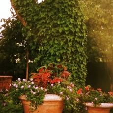 Weigand Garden 3