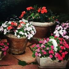 Weigand Garden 5