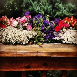 Alyssum and petunias spill over a window box.