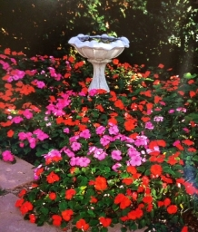 Vibrant flowers surround a fountain.