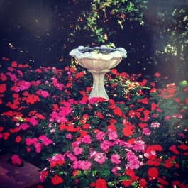 Birdbath surrounded by flowering impatiens.