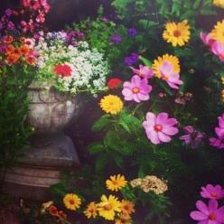 """""""Helenium autumnale, heliopsis helianthoides"""""""